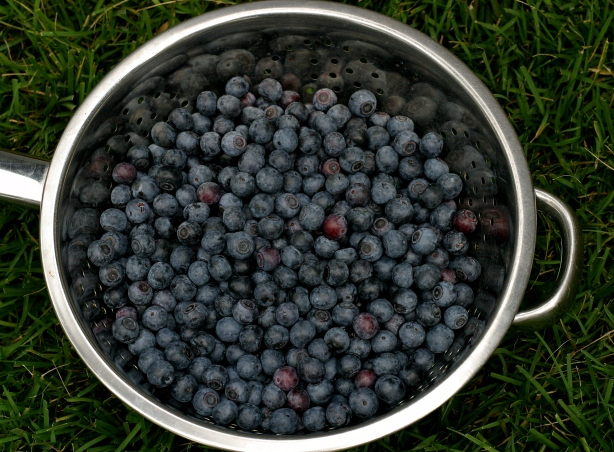 6+-cups of fresh--Homegrown Blueberries