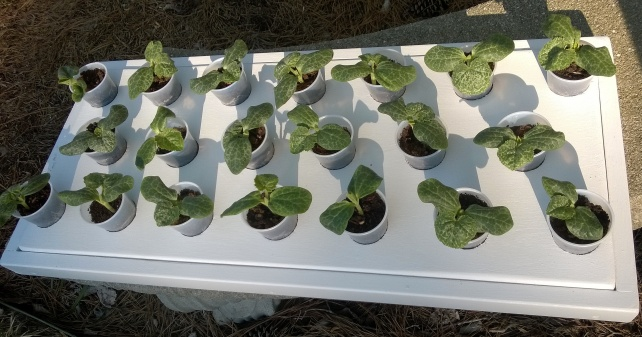 Seedling tray, with special cup holders, outside.