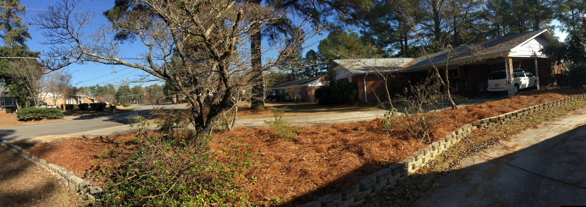 Autumn ~ Waiting for most of the pine needles to fall before I rake–it is DONE, 12/15