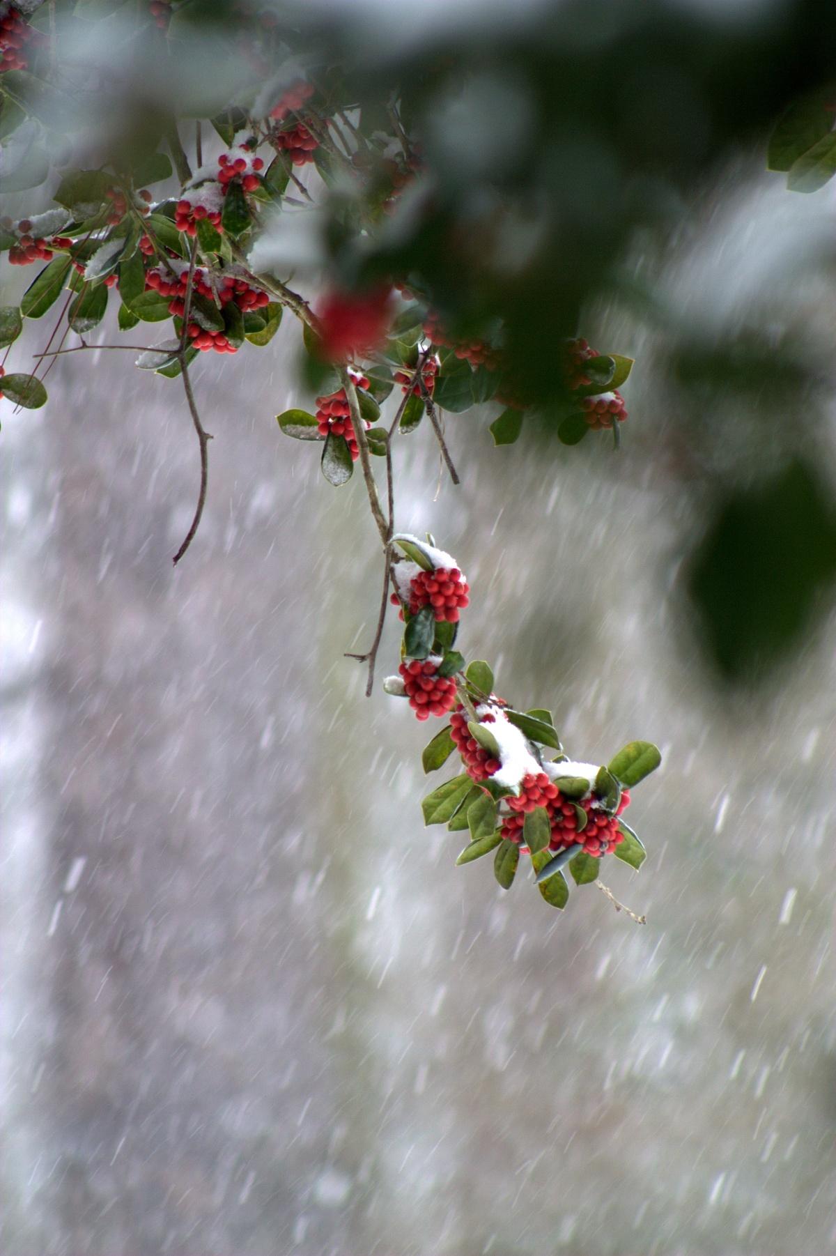 Photography ~ It's SNOWING, Fayetteville, North Carolina,02/24