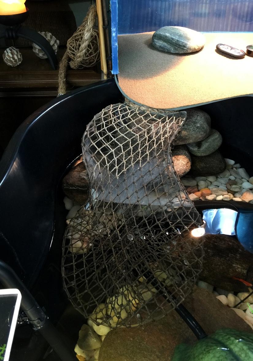 DIY ~ Aquatic Habitat–The Basking Area–The Ramp, Step3,04/17