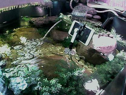 Aquatic Habitat Cam#3