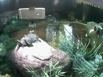 Aquatic Habitat Cam#2