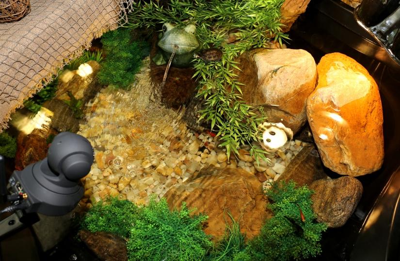 Photography ~ Aquatic Habitat–Basking Boulder Adjustments [taken with Canon EF 24mm f/2.8 IS USM Lens],07/06