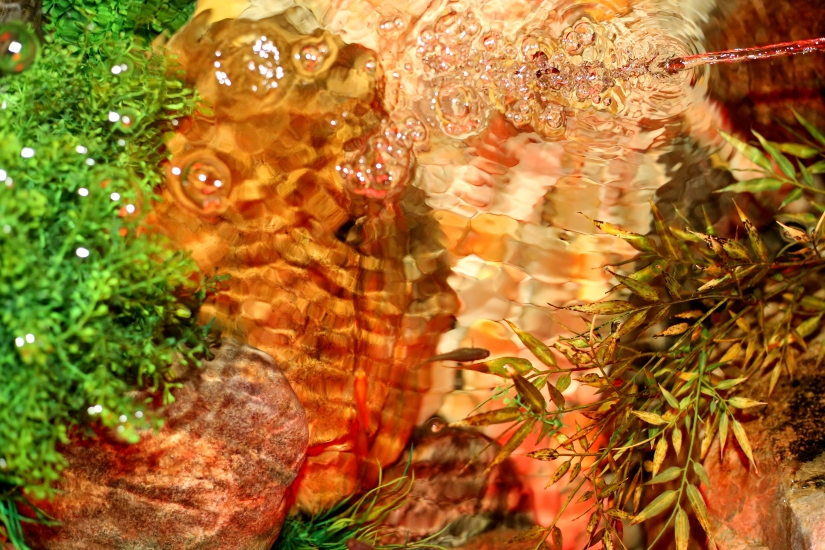 Photography ~ Fishes & Turtles,08/23