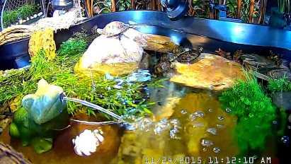 Bale of 5 turtles