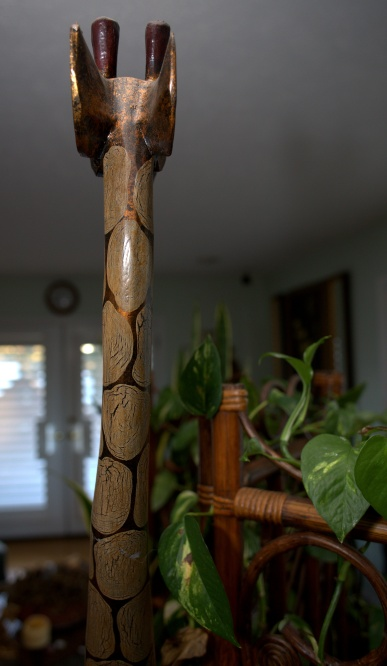 Sansevieria Trifasciata [Mother-in-Law's Tongue] watched by the giraffe