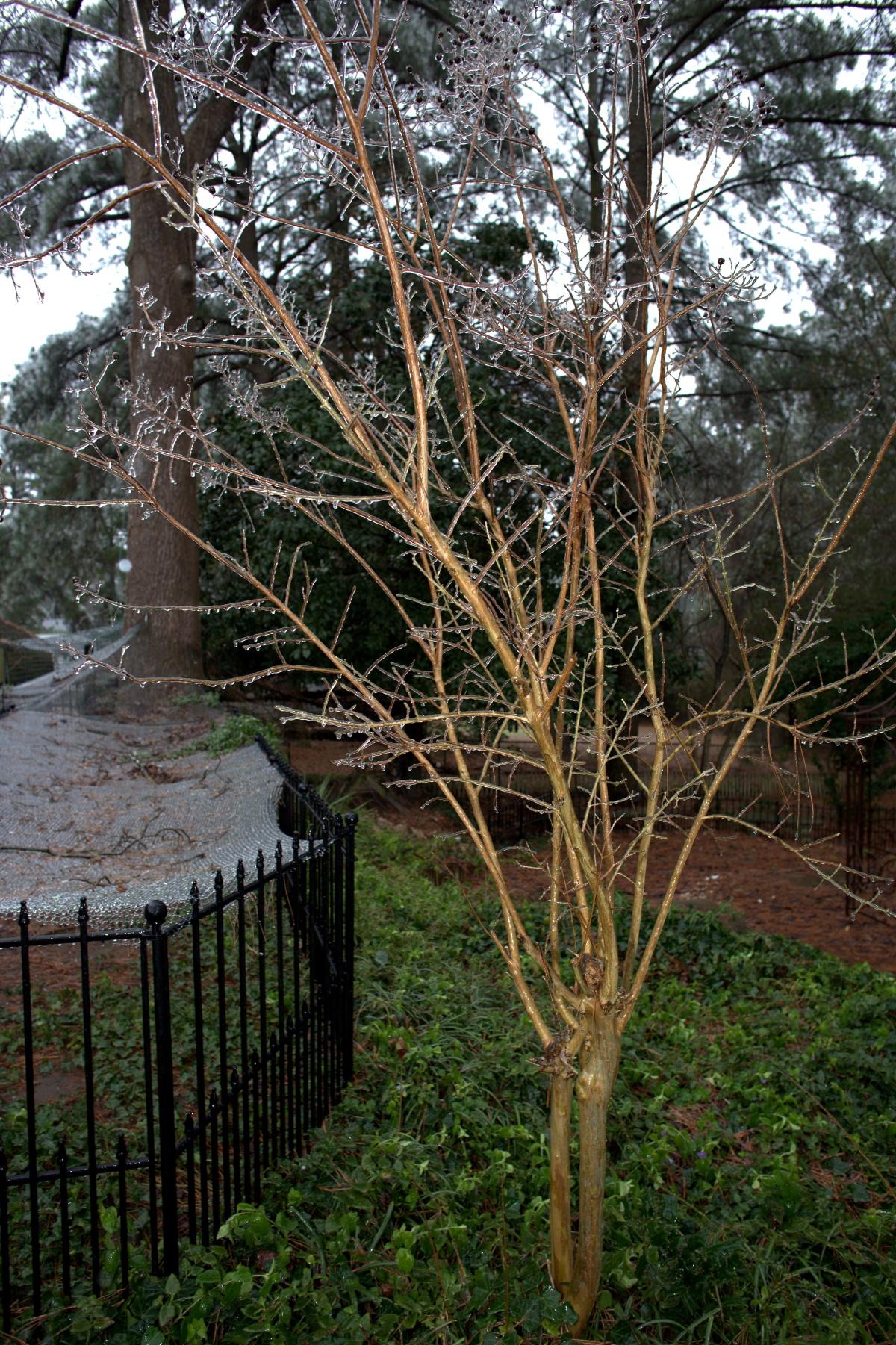 Weather-Photography ~ Ice, Fayetteville, North Carolina,01/22