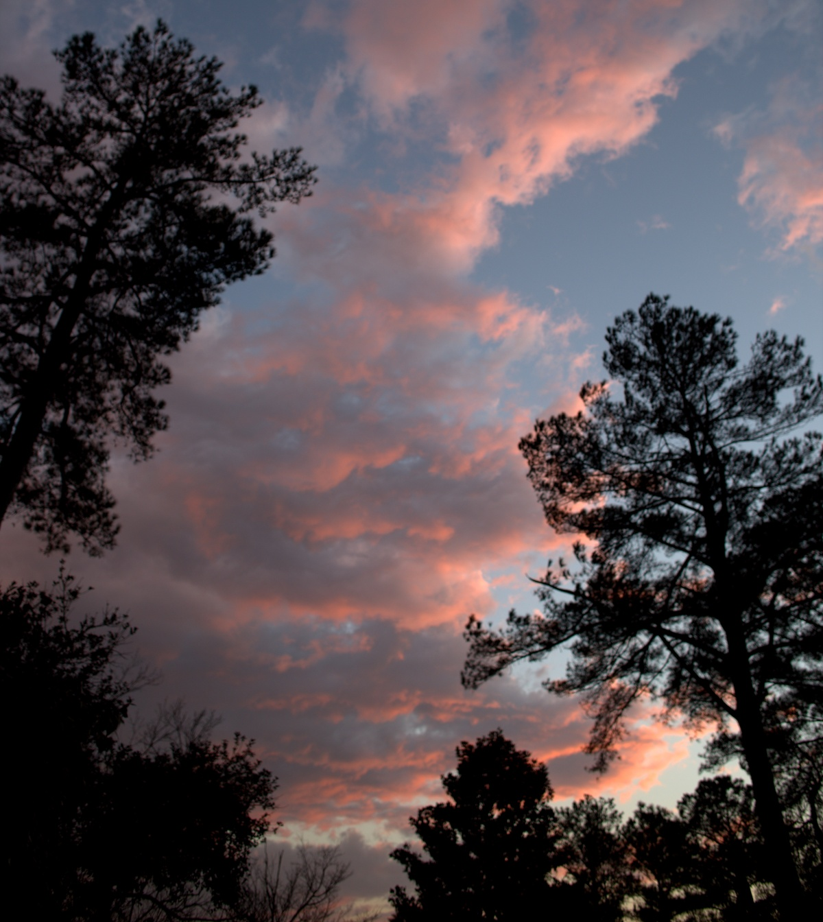 Weather ~ After the storms, Fayetteville, North Carolina,02/24