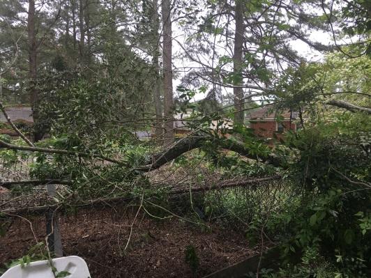 Looking southeast, tree limb on my property