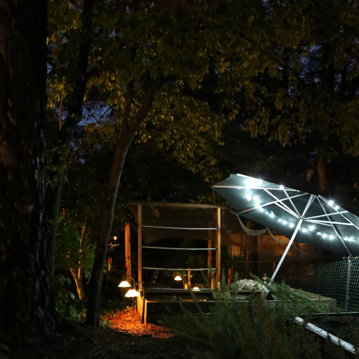 Photography ~ Outdoor Aquatic Habitat–After Dark [Top],04/22