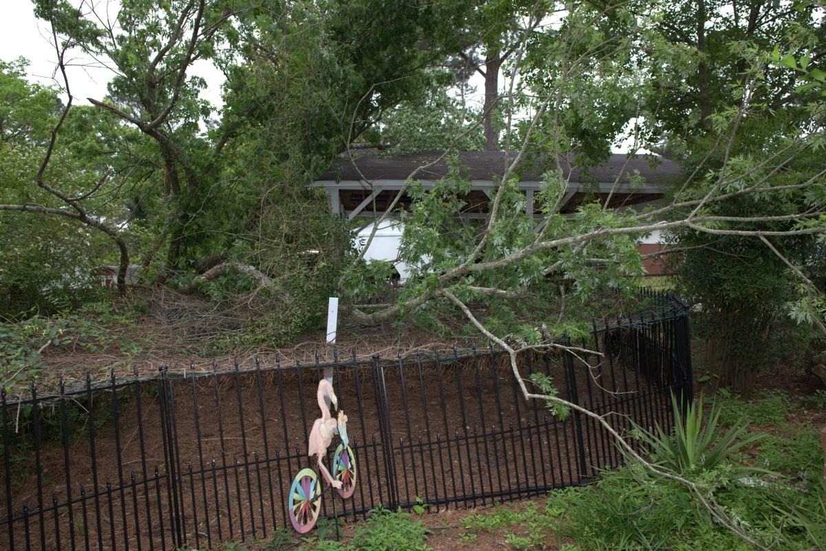 Storm Damage ~ From my neighbor's fallen tree,04/28