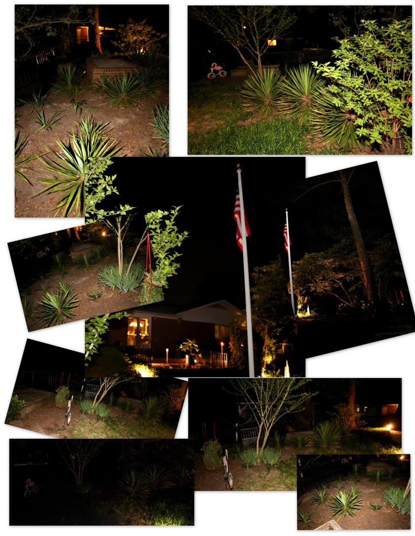 Yucca Night