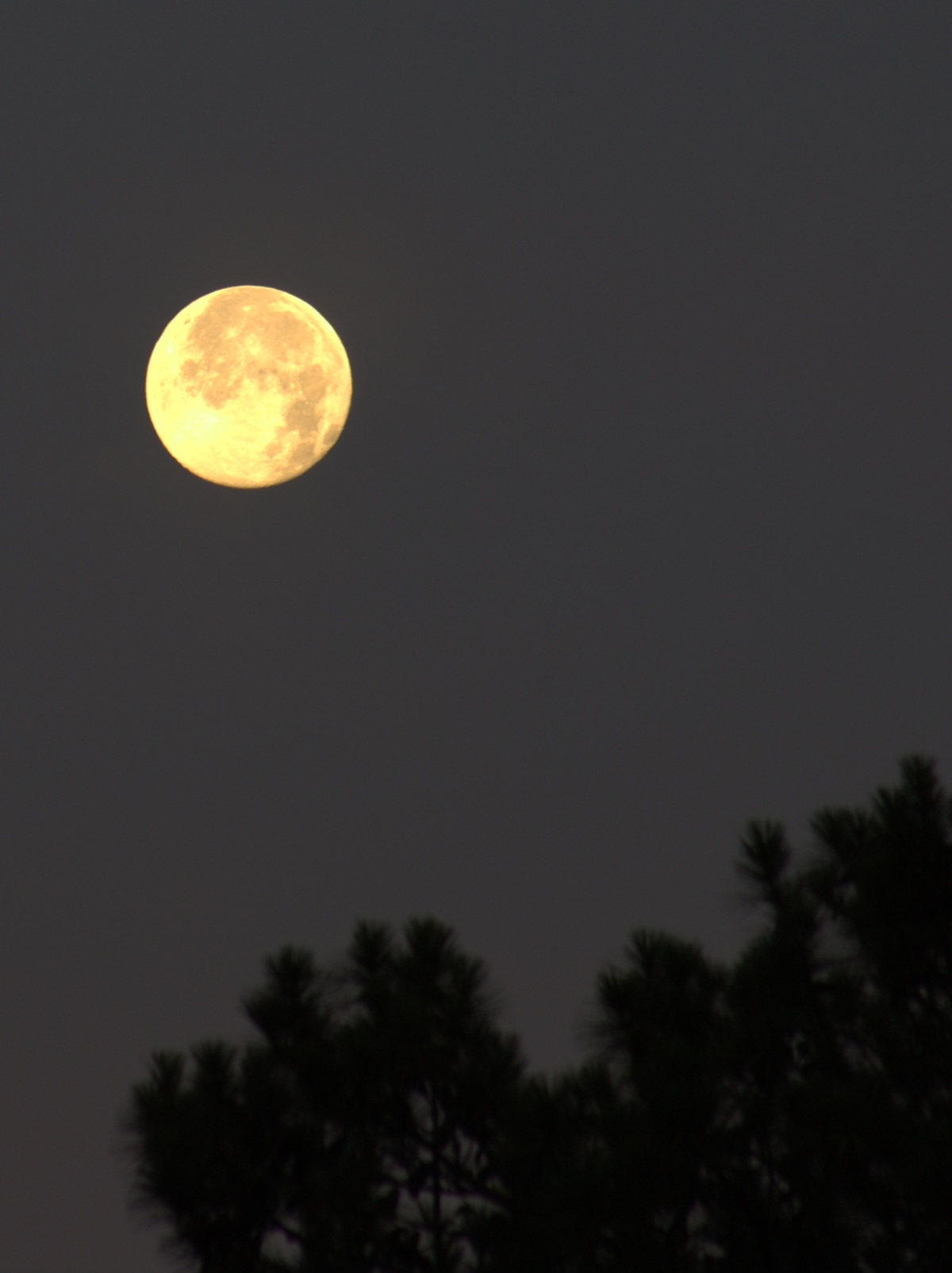 Photography ~ Strawberry Moon early morning, 06/21