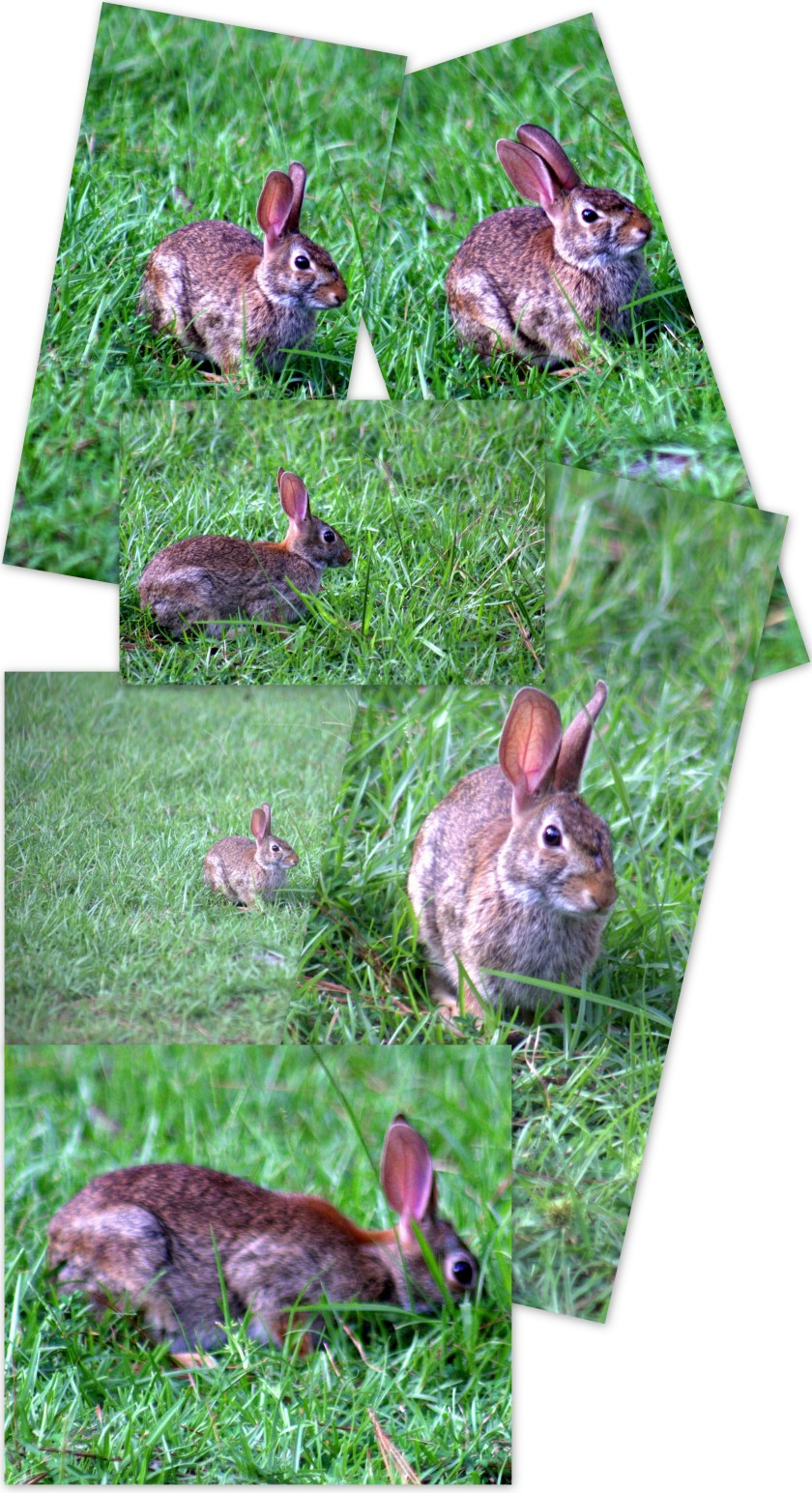 Rabbit in the yard...