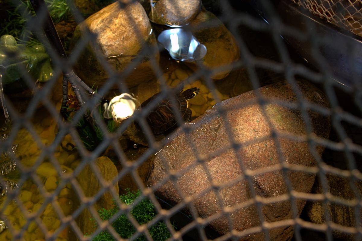 Aquatic Habitat ~ Basking Stones–Added another one,07/22
