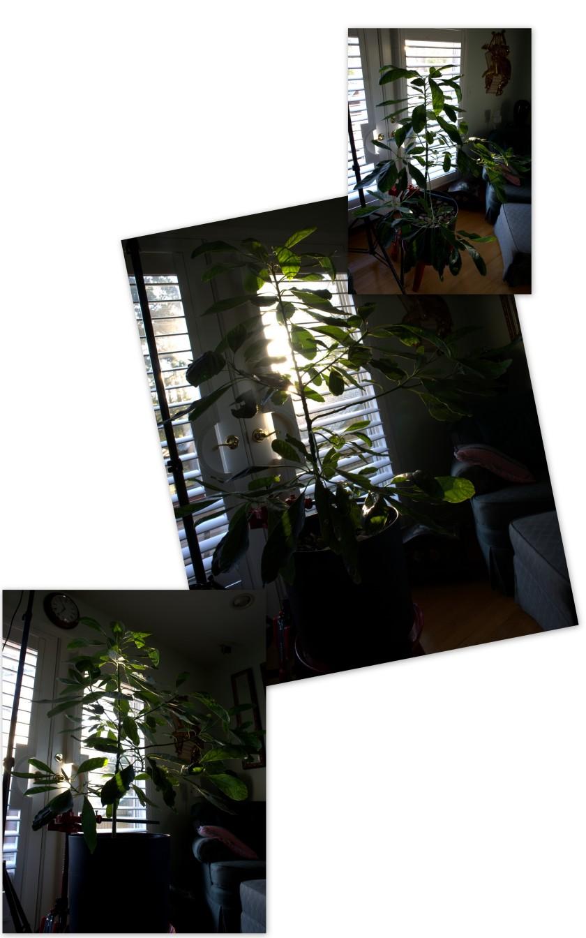 sun-after-matthew_1009