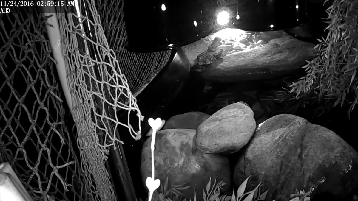 Aquatic Habitat ~ Foscam HD IP Camera ScreenGrabs [NightScapes],11/24