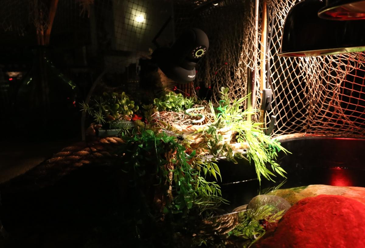 Photography ~ Aquatic Habitat–Lighting, 11/21