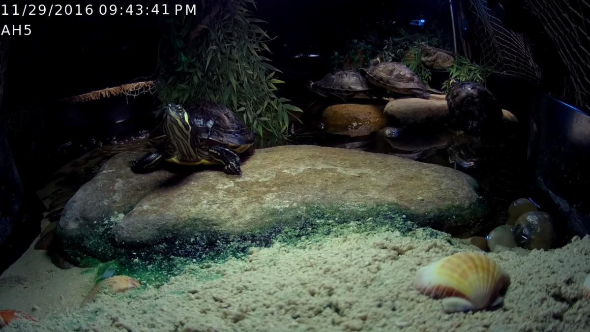 Foscam IP ScreenGrabs Before Rock Bridge ~ Aquatic Habitat & BaskingYBST