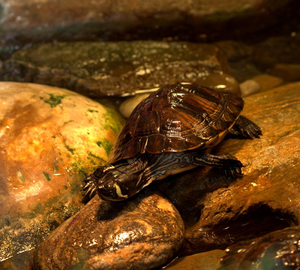 Aquatic Habitat ~ Turtles being Turtles,12/06