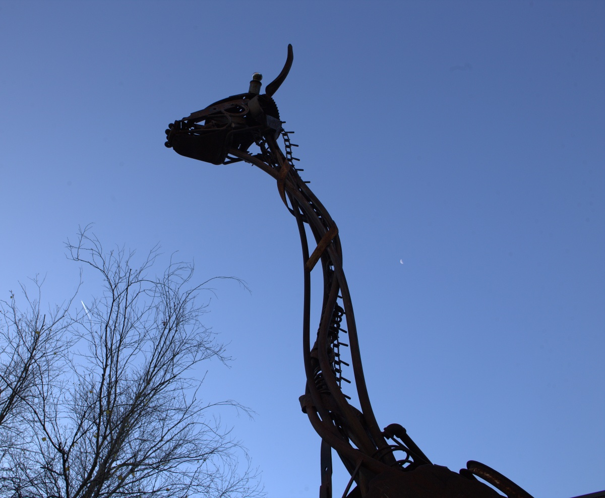 Photography ~ Work in Progress–03 | Giraffe by Jonathan Bowling [1st in the 20's], 12/26