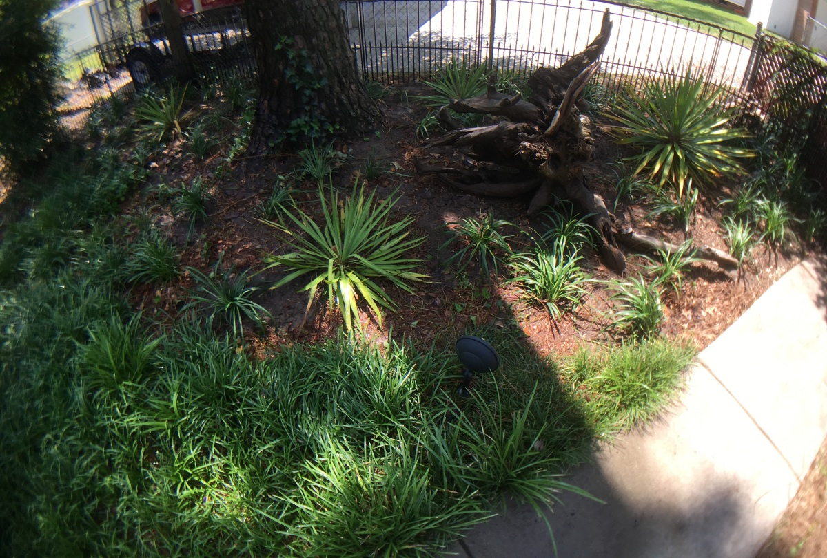 Photography ~ Backyard Landscaping–Added More Liriope [Monkey Grass], 05/21
