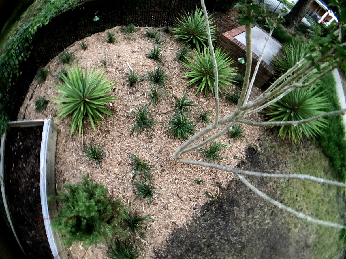 Photography ~ Backyard Landscaping–Liriope [Monkey Grass] Aerial Perspective, 05/26