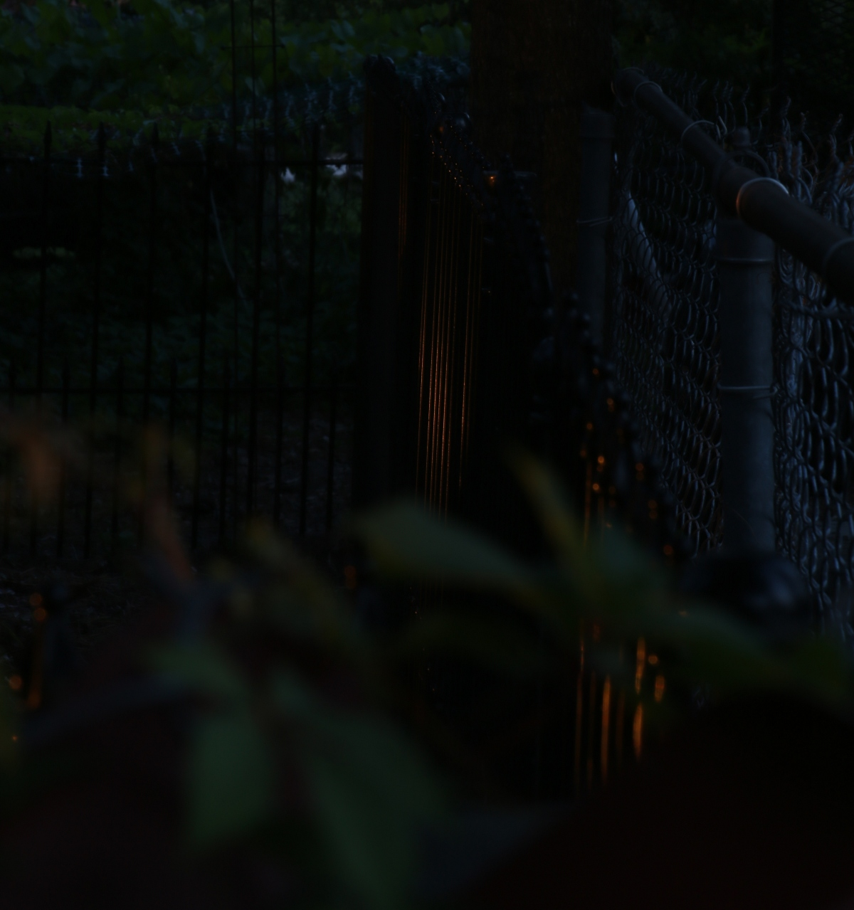 Photography ~ Night–Backyard Landscaping–Moved Wrought Iron Fence,05/20