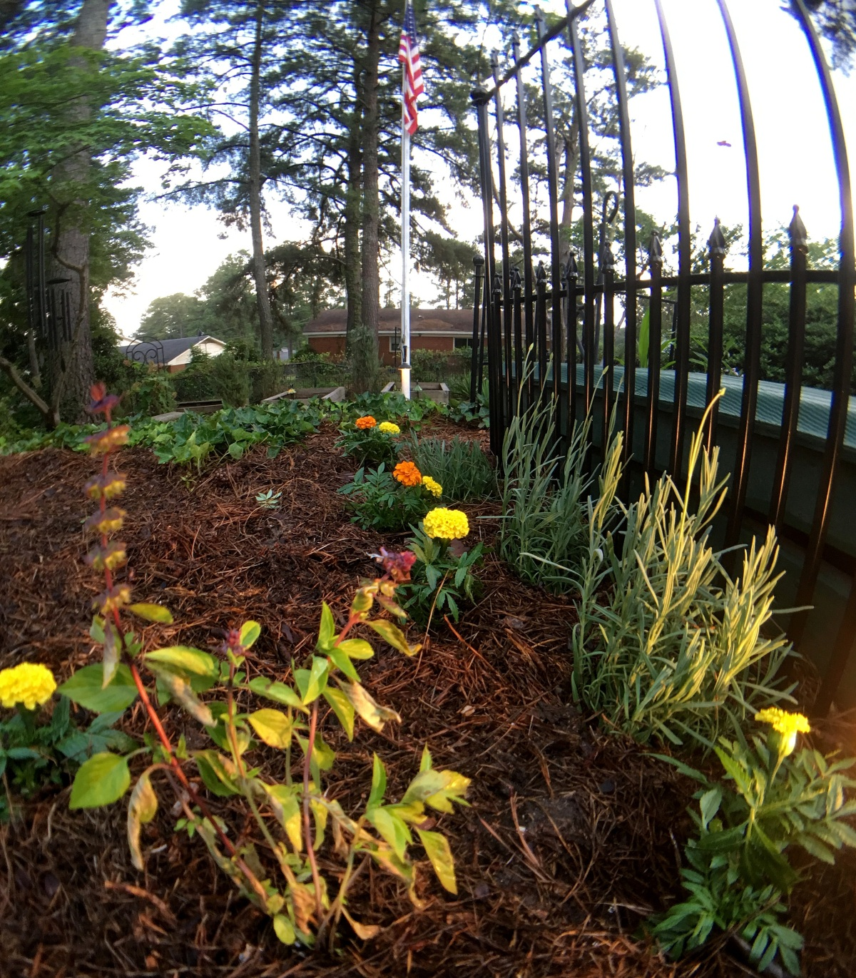 Home ~ Landscaping, Backyard–more flower beds, 06/03
