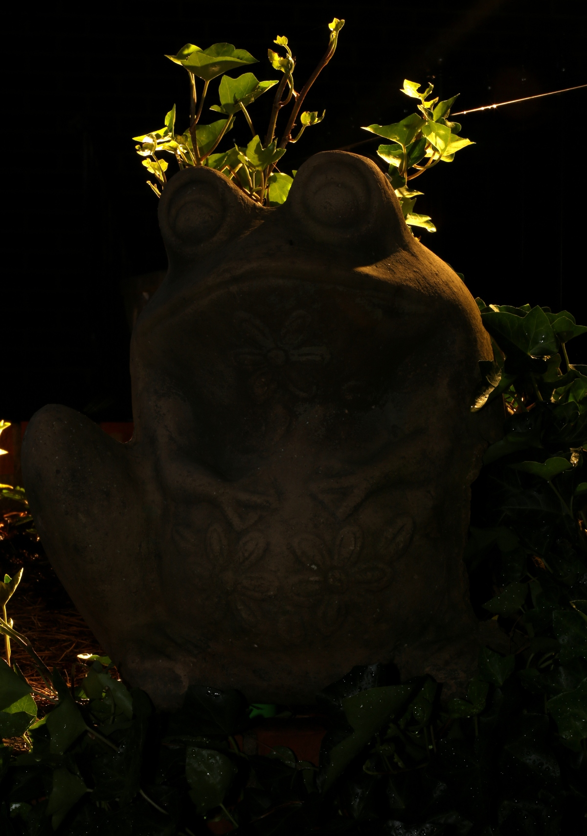 Photography ~ Faces of Filbert the Frog–After Dark,06/08