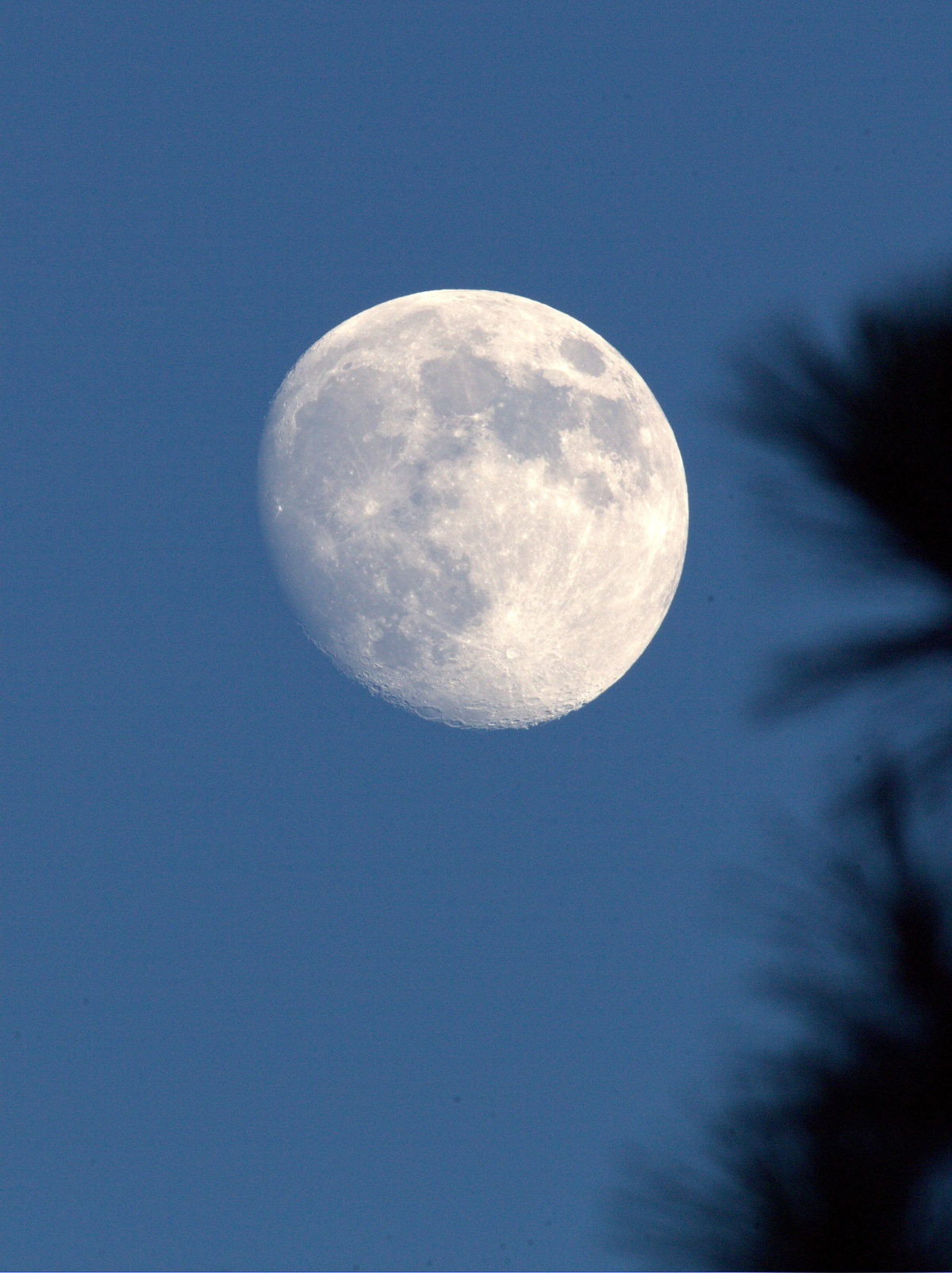 Photography ~ The Moon [before dark], Fayetteville, NC–400mm Super Telephoto, + Extender EF 2X III = 800mm, 08/04