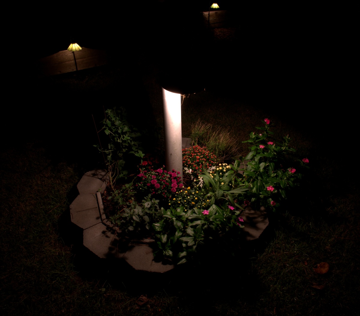 Landscaping ~ Backyard, Cedar Gardens–The mums are in–night shot, 09/03