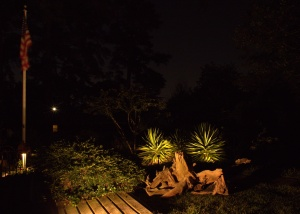 After Yucca accent lighting