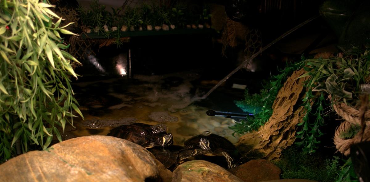 Photography ~ CamRanger, PT Hub, & MP-360 Pan/Tilt Head–Turtle Snaps,09/11