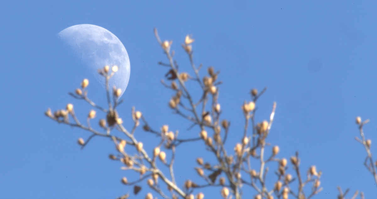 Photography ~ Fayetteville, North Carolina–Other First Quarter Moon Shots, 01/24