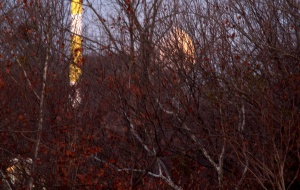 Nearing moonset @ 7:15--view will be obstructed--pic time 7:05 am EST