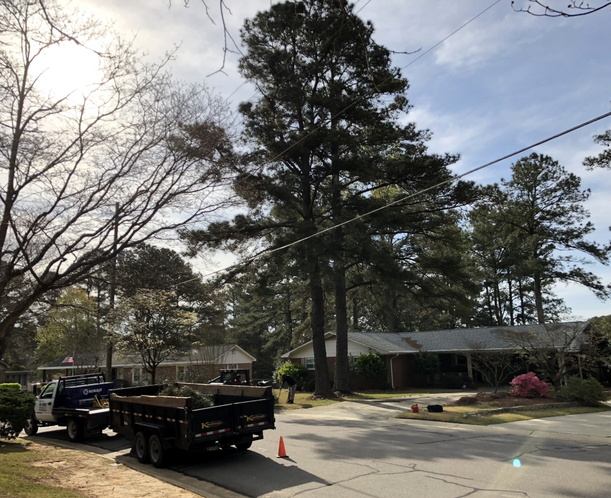 Home ~ Double Pine Tree Removal–Fast Timelapse [60FPS],03/29