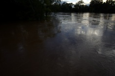 The Cape Fear River at 60-feet or so [looking west--Grove street to the right]