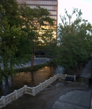 Cross Creen in Linear Park. Its level is down from a day ago.